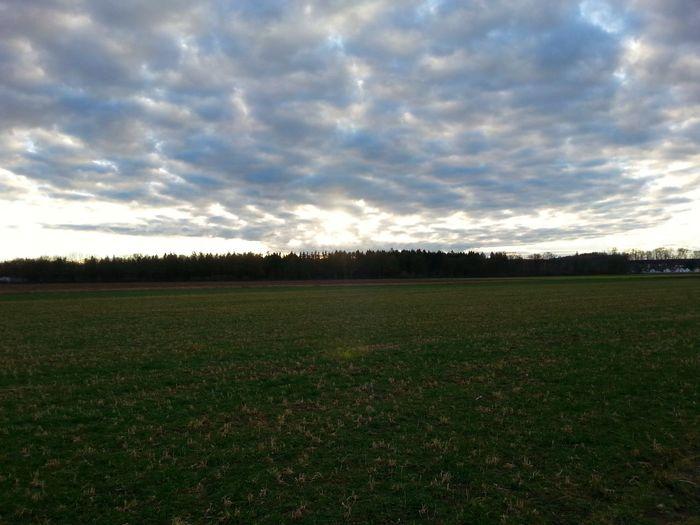 Overcast Agriculture Tree Rural Scene Field Sky Grass Cloud - Sky Landscape