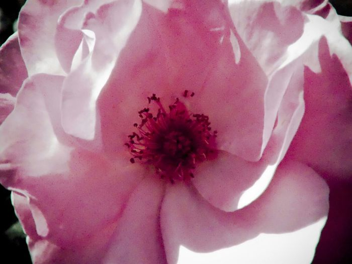 Roses Flower Collection Flowers, Nature And Beauty Flowers,Plants & Garden