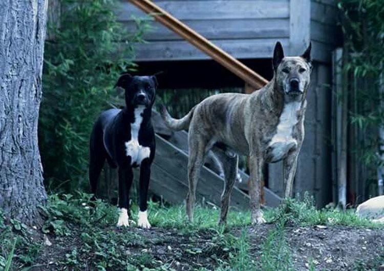 I Love My Dog Dog Chien Chiens Lana Arkos