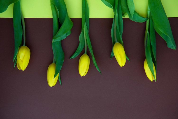 Yellow flowers tulips on dark background Yellow Yellow Flowers Yellow Tulips In Row Top View Above Brown Background Dark Bright Colorful Copy Space Place For Text Pattern Backdrop Green Color No People Side By Side Group Of Objects Table Medium Group Of Objects Close-up Beautiful EyeEm Best Shots Eyeem Background EyeEm Creative Inspiration Color Horizontal Image Freshness Spring Season  Postcard Design Element Interior Design Desktop Desktop Pc Picture Plants