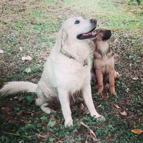 Dog Doglife Friend Argo&kurtz Happy Time Love Solosorrisi