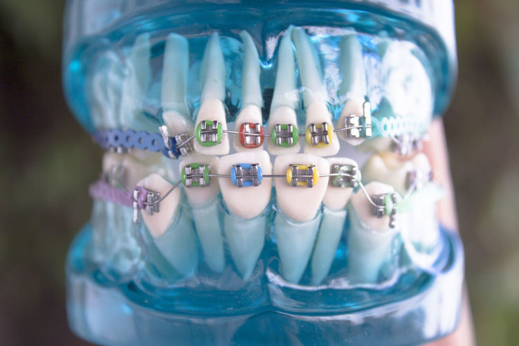 Close-up of artificial teeth