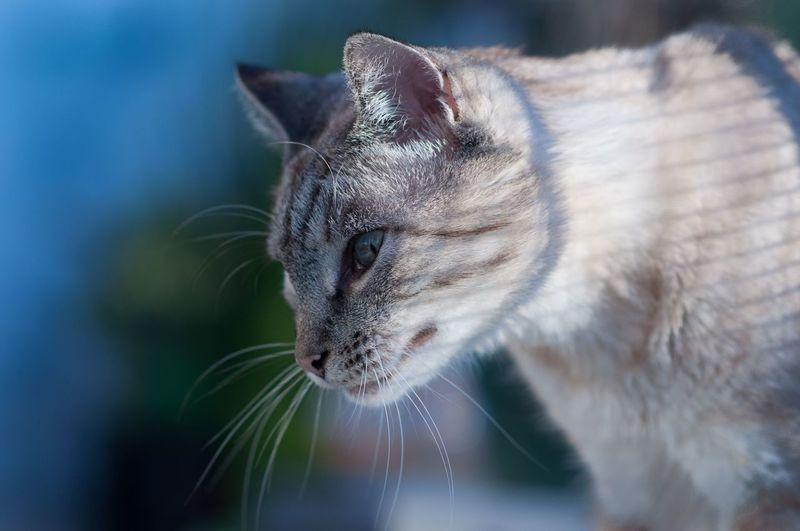 My cat : Baya