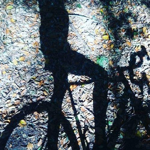 Cx Cyclocross Cycling OutsideIsFree Brandenburg