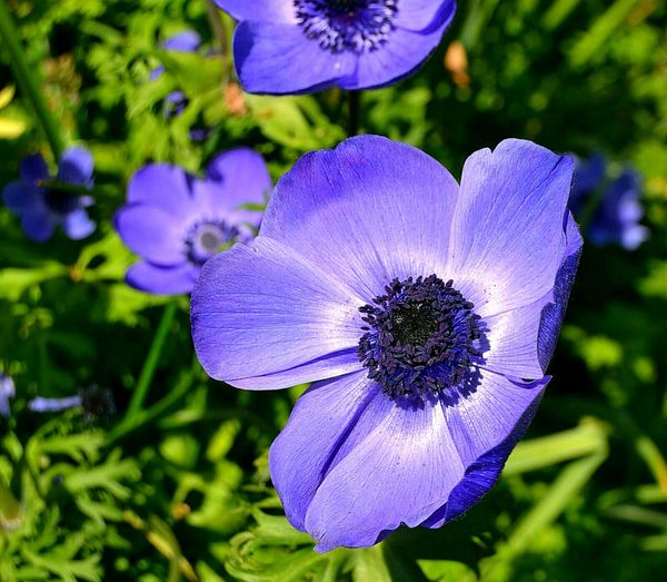 Flower Purple Nature Plant Beauty In Nature Flower Head Close-up Petal Outdoors Focus On Foreground Fragility No People Day Blue Freshness Nature Agriculture No People. Beauty In Nature Diamond Pattern