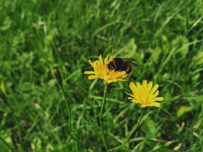 Flower Insect Animals In The Wild One Animal Animal Themes Plant Nature Focus On Foreground Fragility Animal Wildlife Grass Green Color No People Yellow Butterfly - Insect Beauty In Nature Uncultivated Outdoors Freshness Flower Head