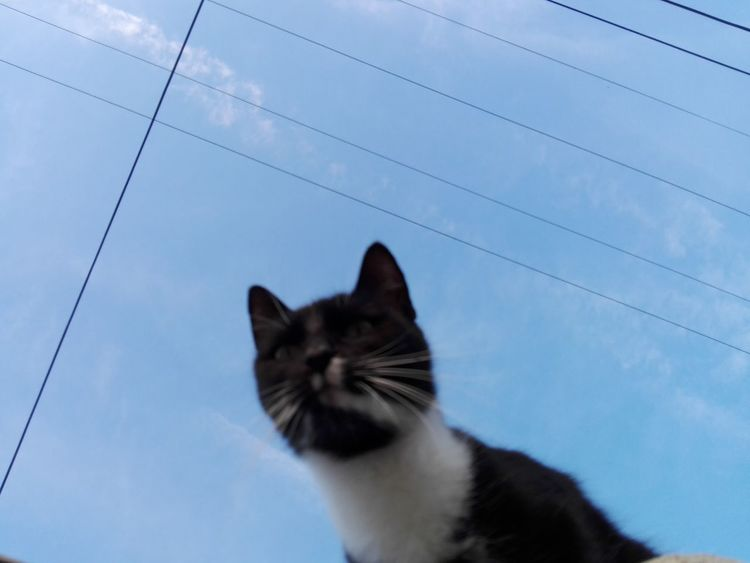 Cat Uppon Blue Sky Cat Uppon Sky Pets Domestic Cat Cat One Animal Feline No People Blue Sky Outdoors Nature Close-up Animal No Person WOLFZUACHiV Photography Huawei Photography On Market Wolfzuachiv WOLFZUACHiV Photos Veronica Ionita Ionita Veronica Eyeem Market Huaweiphotography
