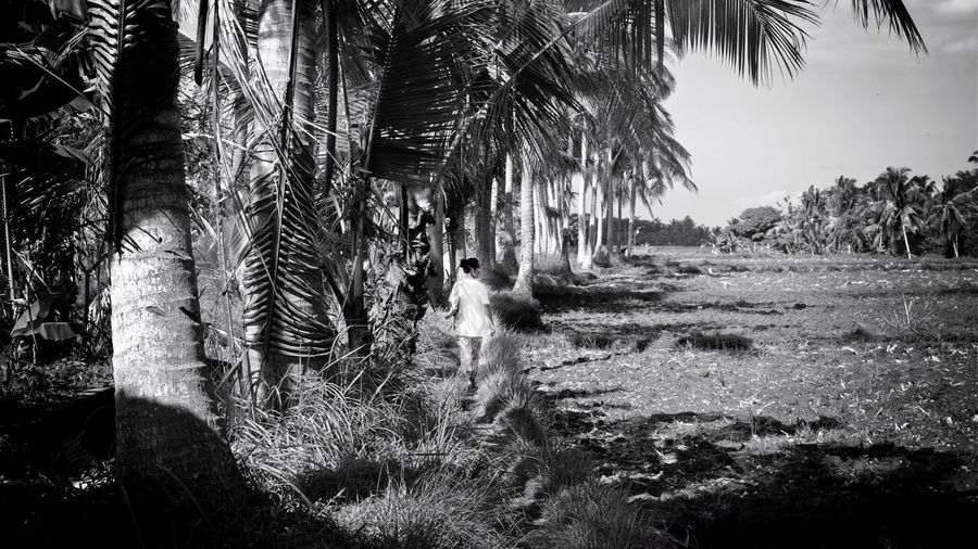 back in time Rice Field Woman Walking Rice Paddy Jungle Tropical Paradise One Person Away From Camera Tranquility Idyllic Scenery I Want To Be There Peaceful Serene Outdoors Daytime Black And White Monochrome Palm Trees Coconut Trees Bali, Indonesia Pathway Fine Art Photography Wanderlust Showcase July