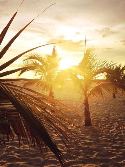 Sunset Sunshine Summer Beautiful Beach Beachphotography Baby Palms Florida Fort Myers United States