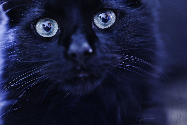 Close-up of black cat