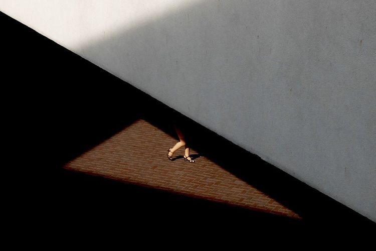 Shadow of tree on the wall