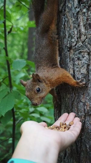Close-up of hand holding squirrel on tree