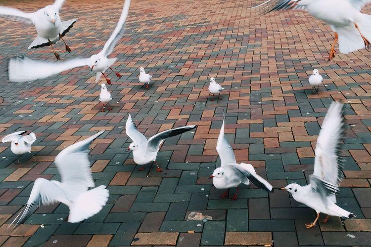 High angle view of seagulls on paved street
