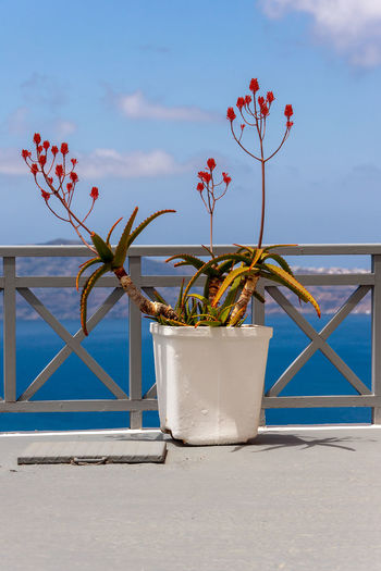 Close-up of potted plant by sea against sky