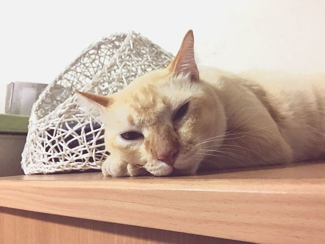 Cats Cat Cat♡ Cat Lovers Animals Cats Of EyeEm Sleeping Cat Sleeping Sleepiness