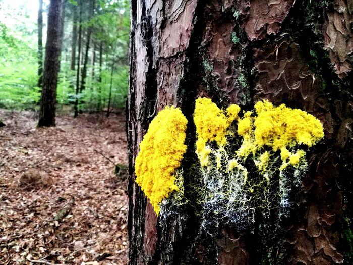 Moshroom Woods
