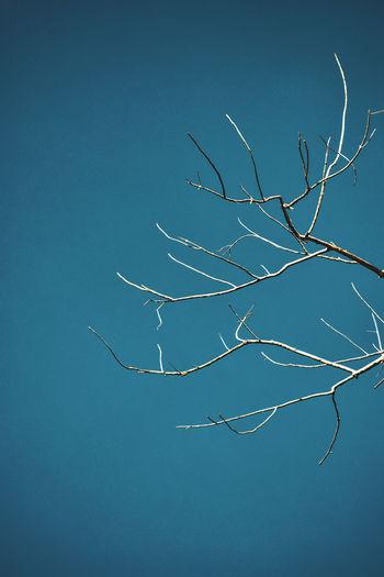 Tree branch in