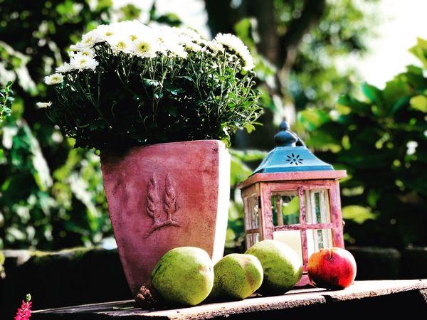 Stilleben. Fruit Food Table Outdoors Tree Decoration
