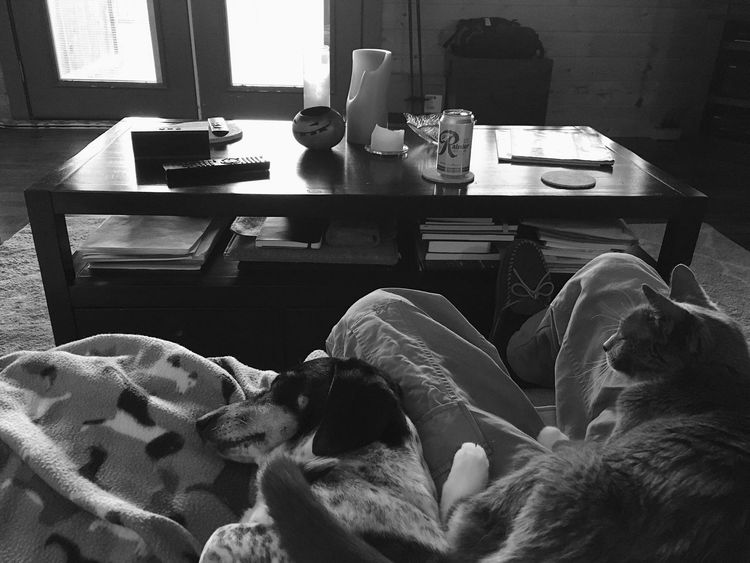 couch time with the critters. Wasatch County