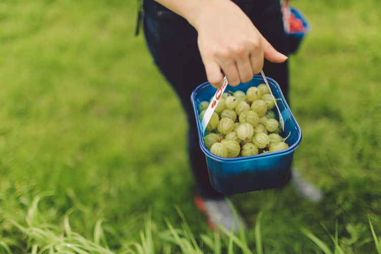 Low Section Of Person Holding Gooseberries On Grassy Field
