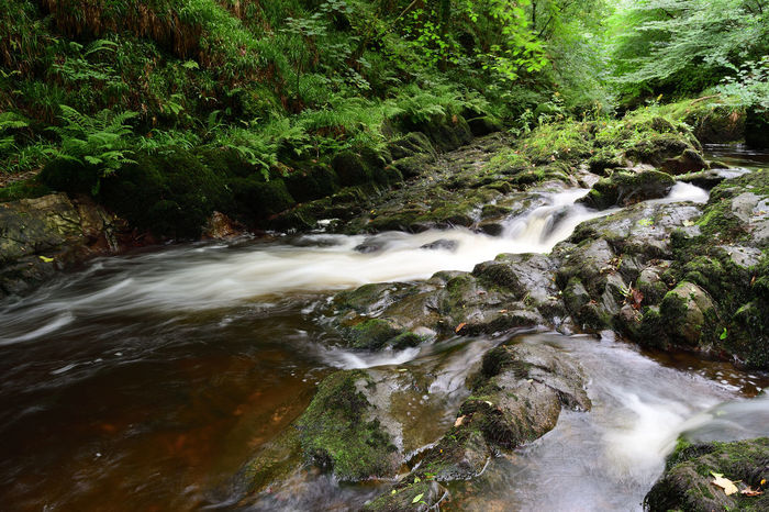 Check This Out Devon EyeEm Best Shots EyeEm Nature Lover Flowing Water Nature Taking Photos Tranquility Watersmeet Beauty In Nature Day Exmoor Forest Idyllic Landscape Long Exposure Motion Nature_collection No People Outdoors River Scenics Tranquil Scene Water Waterfall