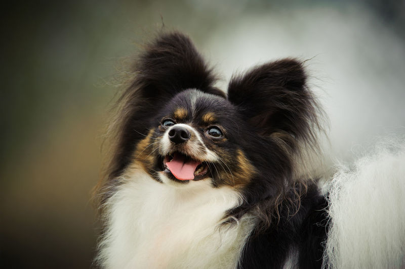 Close-up of a dog looking up