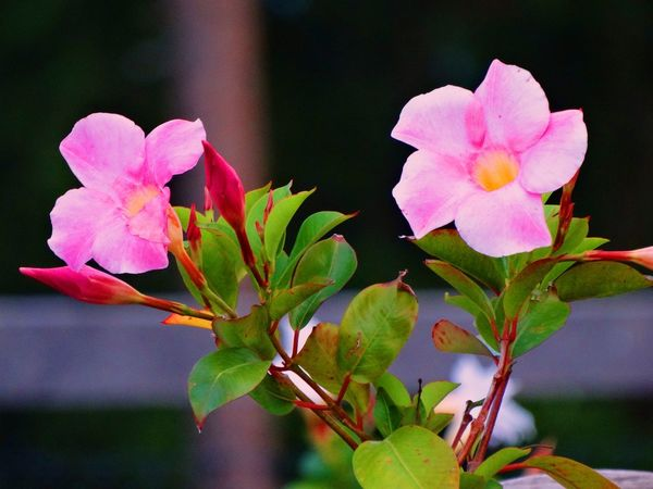 EyeEmNewHere Beauty In Nature Blooming Flower Flower Head Fragility Nature Pink Color Plant