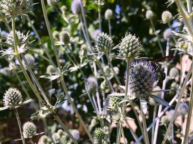 Flower forest Flower Nature Plant Thistle Growth Day Flower Head Outdoors Beauty In Nature Fragility Uncultivated No People Close-up Freshness EyeEmNewHere Plant Nature Flowers
