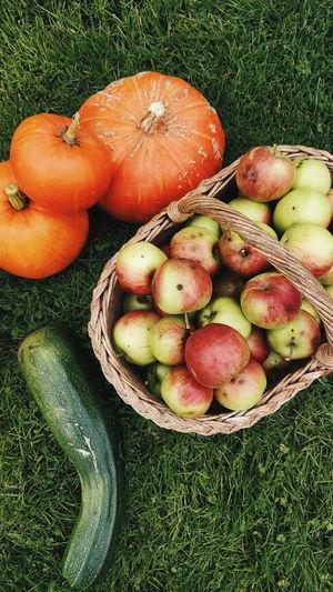 Harvest time, Lithuania Basket Outdoors Harvest Season Pumpkin Pumpkin Season Harvesting Harvest Time Harvesting Season Apple Appleharvest