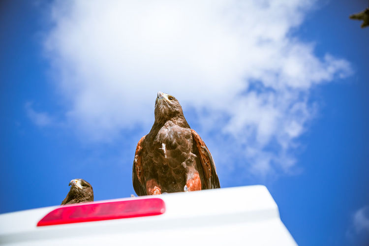 Eagles and blue sky, directly below Day Natural Light Bird Animal Themes Animal Animal Wildlife Bird Of Prey Eagle No People Outdoors London Europe Wildlife Blue Sky Urban Animals Low Angle View Cloud - Sky Sky Perching Two Animals Sunlight Blue Directly Below