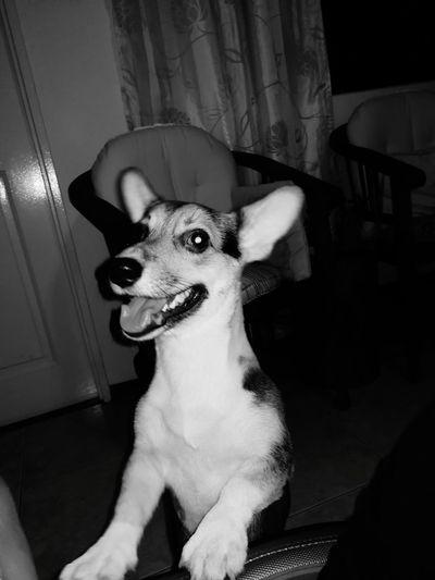 #pet #dogs