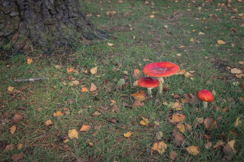 High angle view of mushroom growing on field