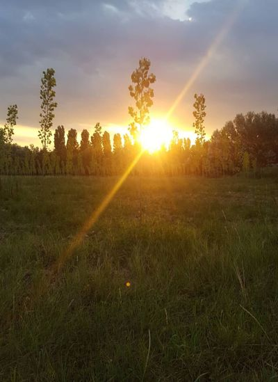Tree Springtime Field