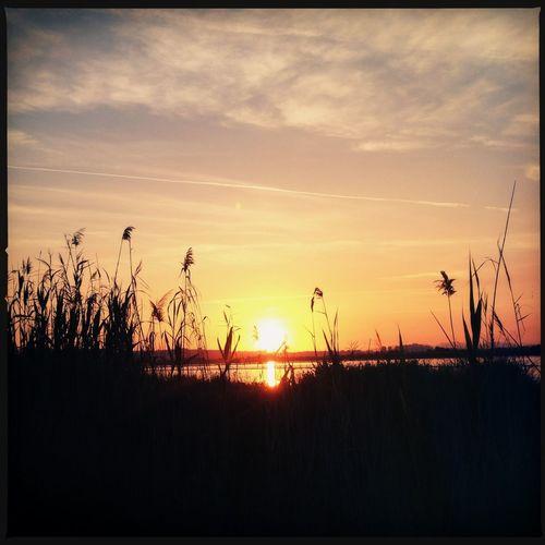 Sunset At Molentargius Park