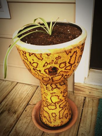 EyeEm Selects No People Close-up Day Repurposed Drum Reuse Plant Unusual Planter Homemade Front Porch Spider Plant