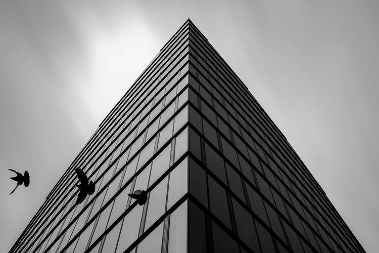 Art Is Everywhere Architecture Modern Built Structure Façade Low Angle View SkySkyscraper Birds Building Exterior Blackandwhite Photography Black & White Minimalism Minimalobsession No People EyeEmNewHere