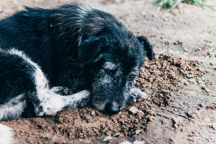 Dog's relaxation EyeEm Best Shots Animal Black Color Canine Dog Domestic Domestic Animals Land Lying Down Mud One Animal Pets Relaxation Vertebrate