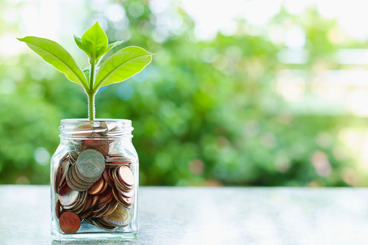 Economy Growth Bank Business Coin Container Currency Ecology Environment Finance Finance And Economy Focus On Foreground Glass - Material Green Color Investment Jar Leaf Making Money Money Nature Outdoors Plant Plant Part Savings Wealth