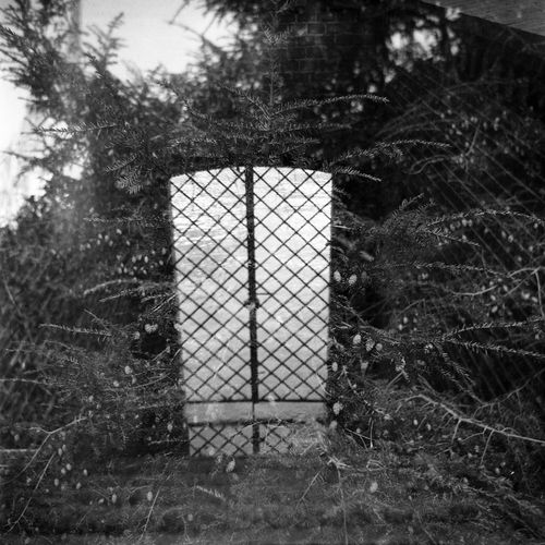 double exposure Double Exposure Doubleexposure 6x6 Gate Black And White Friday Black And White Photography Day Lubitel 166b No People Outdoors Tree
