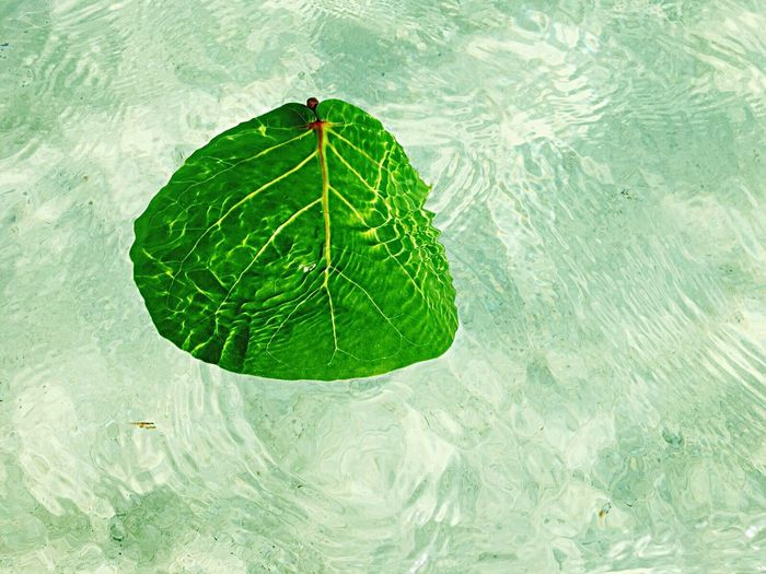 Close-up of leaf floating on water