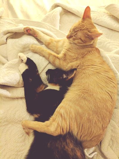 Prettybabies Cuddly Cats Toosweet Babysitting