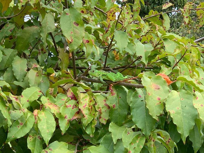 Iguana asoleándose #Venezuela #reptile #iguana #animal Growth Plant Leaf Nature Tranquility