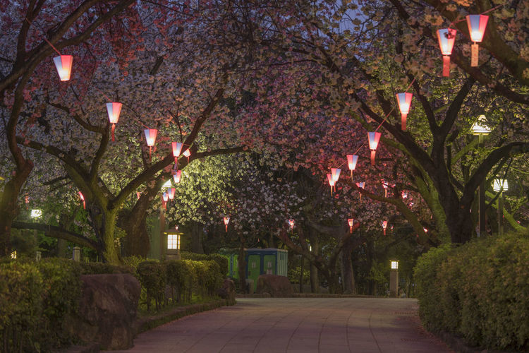 View of flowering trees in park at night