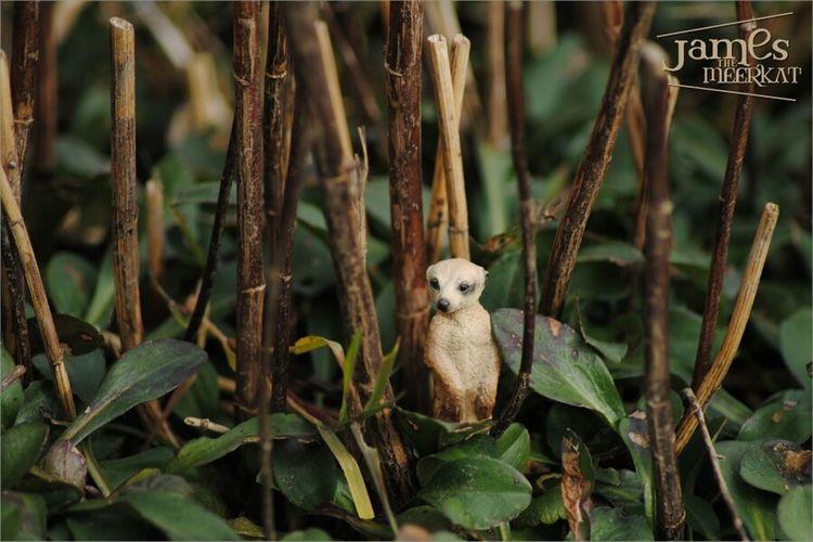 James The Meerkat Meerkat Schleich Figure Plant Nature Cute Green Macro Macroclique