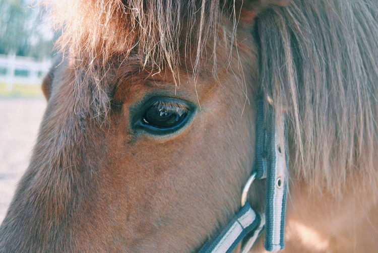 Close-Up Of Horse Wearing Bridle