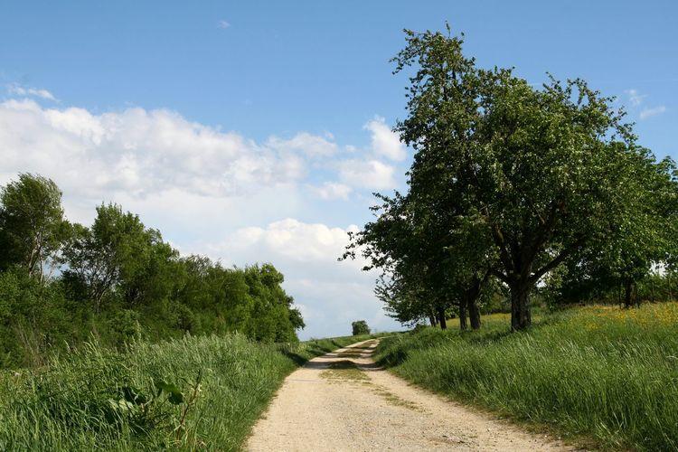 Trail Path In