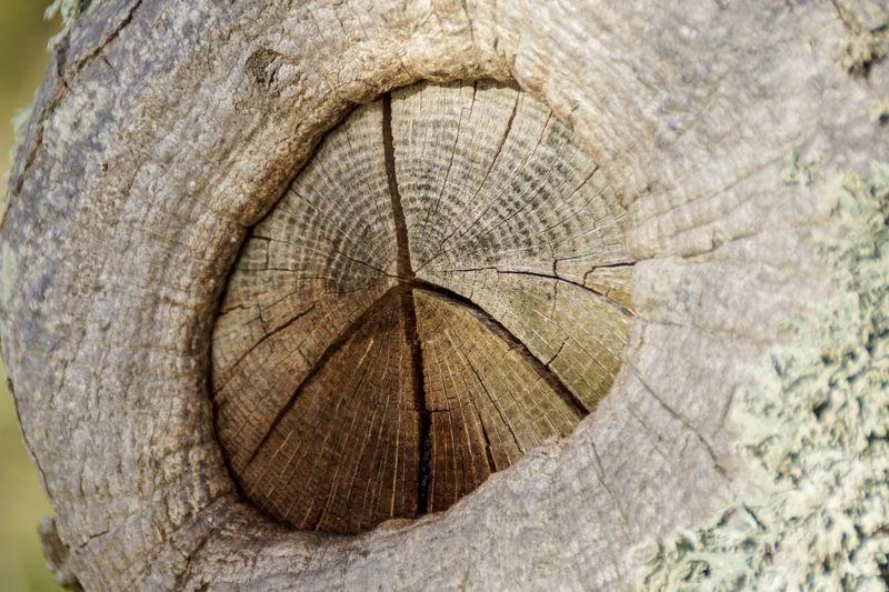 Pease Tree Porn Tree Nature😀