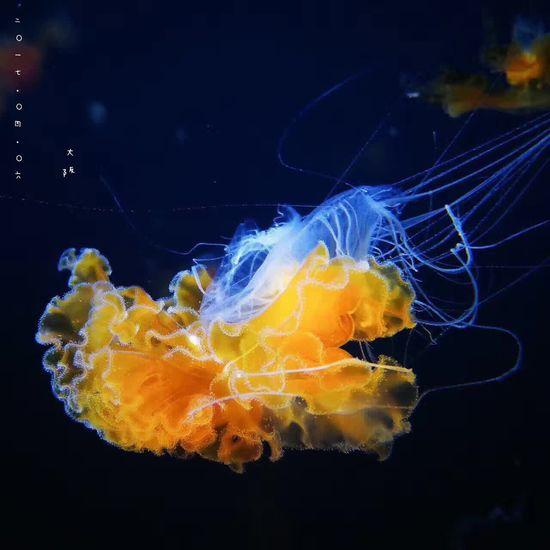 水母,美的如此像星雲。(世界最大海洋館之一,大阪海遊館) OSAKA Japan Travel Enjoying Life Kaiyukan Aquarium Jelly Fish Beautiful Blue First Eyeem Photo Photography Hello World
