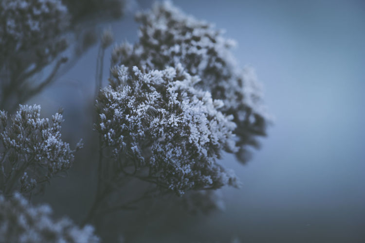 Cold Temperature Winter Snow Plant Nature Beauty In Nature Selective Focus Close-up Frozen Tree White Color No People Day Ice Frost Tranquility Fragility Vulnerability  Outdoors Fir Tree Coniferous Tree