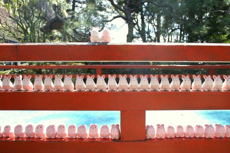岡崎神社 東天王 Kyoto Japan 京都 Shrine 兎 おみくじ